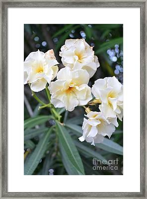 Nature-flowers Framed Print by Sarah Loveland