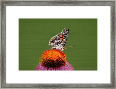 Nature Freedom Framed Print by Marion Johnson
