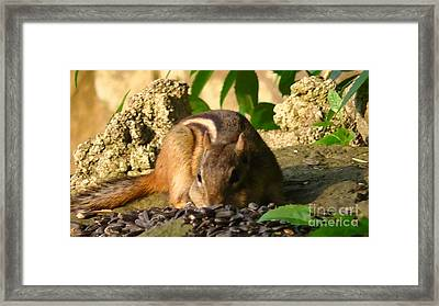 Nature Gone Wild-chipmunk Framed Print by Brittany Perez
