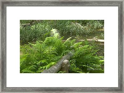 Hamilton Springs Hike - Luther Fine Art Framed Print