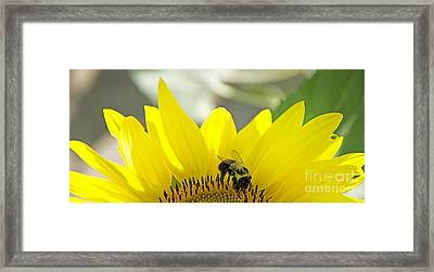 Nature Has Yet To Fail. Framed Print