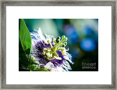 Nature In Poetry Framed Print