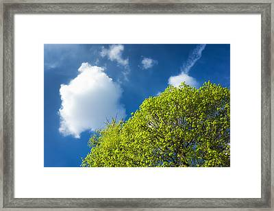 Nature In Spring - Bright Green Tree And Blue Sky Framed Print