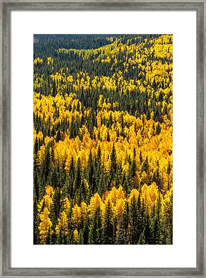 Nature In Yellow And Green Framed Print