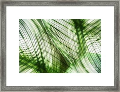 Nature Leaves Abstract In Green Framed Print by Natalie Kinnear