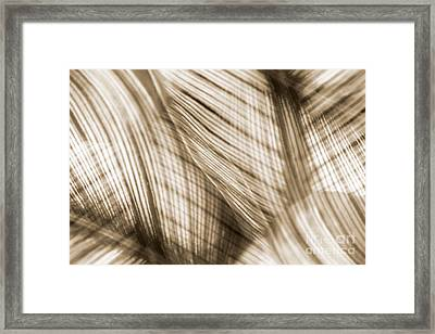 Nature Leaves Abstract In Sepia Framed Print by Natalie Kinnear