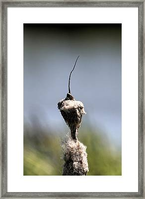 Framed Print featuring the photograph Nature Man? by Leif Sohlman