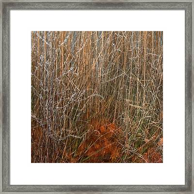 Nature Once Removed Framed Print by Anders Hingel