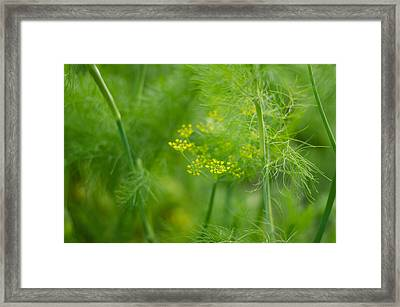 Nature Framed Print by Pablo Lopez