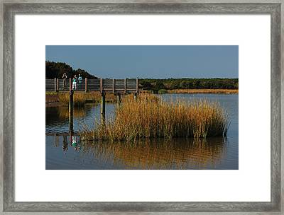 Nature Paparazzi Framed Print by Suzanne Gaff