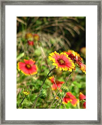 Nature Framed Print by Peggy Burley