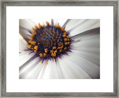 Framed Print featuring the photograph Nature Photography 11 by Gabriella Weninger - David