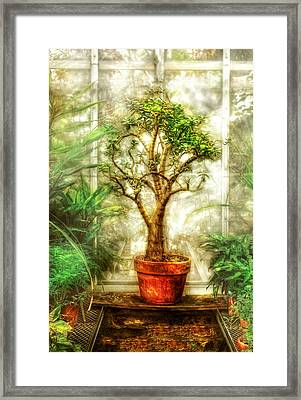 Nature - Plant - Tree Of Life  Framed Print by Mike Savad