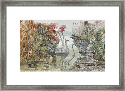Nature Scene And Unseen Framed Print