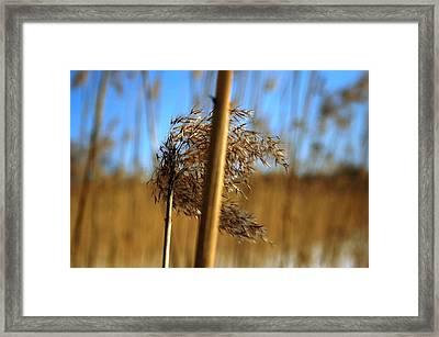Nature Series 1.1 Framed Print by Derya  Aktas