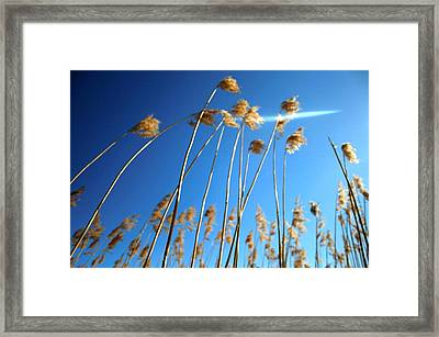 Nature Series 1.3 Framed Print by Derya  Aktas