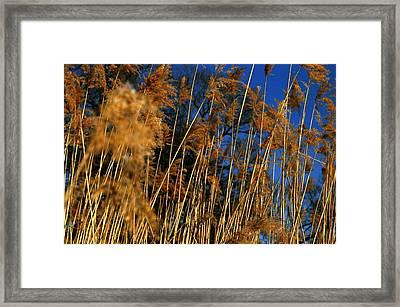 Nature Series 1.4 Framed Print by Derya  Aktas