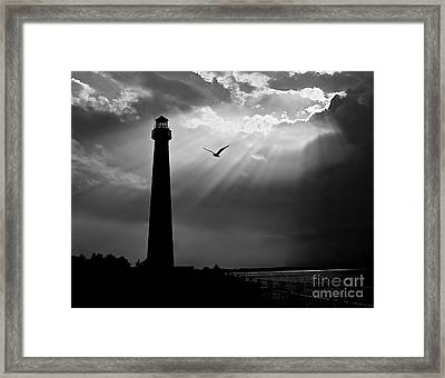 Nature Shines Brighter In Black And White Framed Print