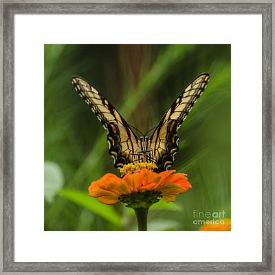 Nature Stain Glass Framed Print by Donna Brown