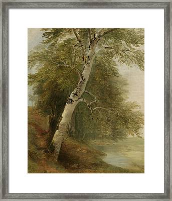 Nature Study   A Birch Tree Framed Print by Asher Brown Durand