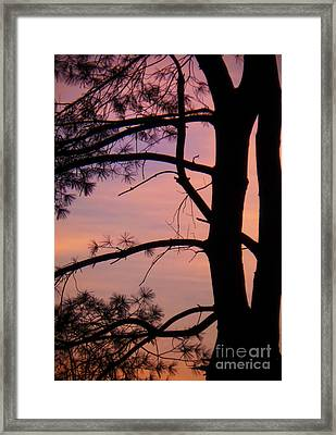 Nature Sunrise Framed Print