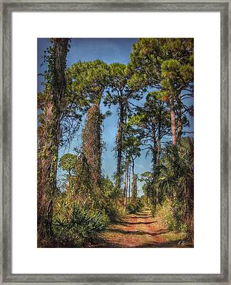 Nature Trail Framed Print by Hanny Heim