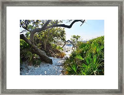 Nature Trail Framed Print by Winston Hudson