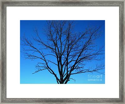 Nature Tree Framed Print by Boon Mee