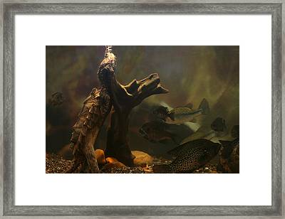 Nature Under Water Framed Print by Linda Fowler