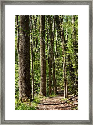 Nature Walk Early Spring Framed Print