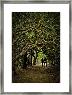 Nature Walk Framed Print by Joseph Hollingsworth