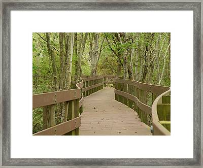 Nature Walk Framed Print by Rosalie Scanlon