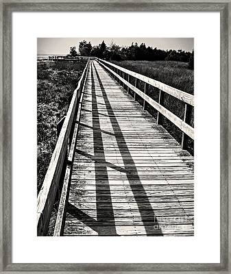 Framed Print featuring the photograph Nature Walk by Vicki DeVico