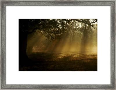 Natures Alarm Clock  Framed Print