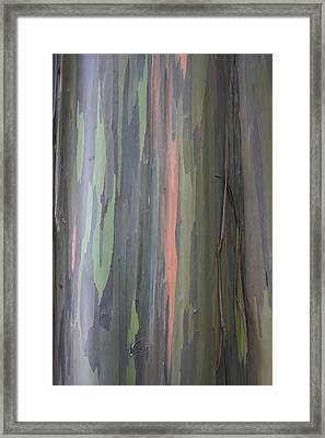 Natures Canvas Framed Print