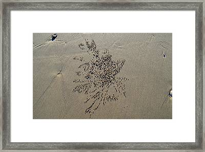 Natures Art - Sand Ball Flower Framed Print