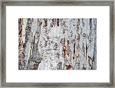 Nature's Art - The Scribbly Gum Framed Print