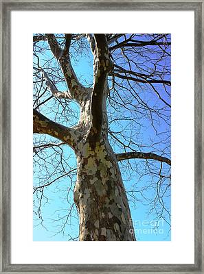 Natures Art Work - Patch Work Framed Print by Judy Palkimas