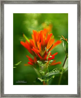 Natures Artistic Tool Framed Print by Alexandra  Rampolla