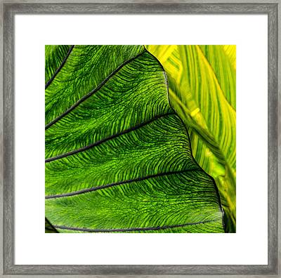 Nature's Artistry Framed Print by Jordan Blackstone