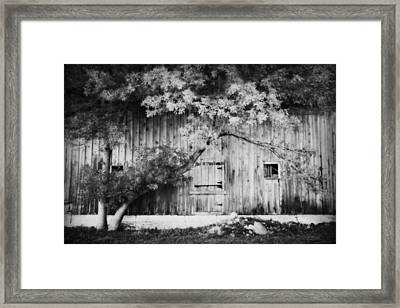 Natures Awning Bw Framed Print by Julie Hamilton