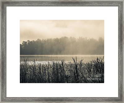 Nature's Beauties - Spiderwebs Birds And Mist Framed Print