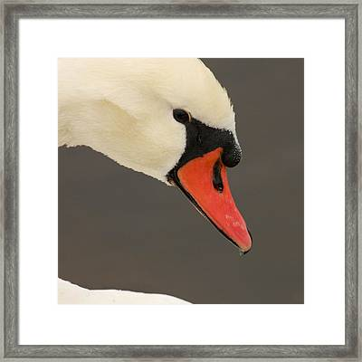 Natures Beauty Framed Print by Bob and Jan Shriner