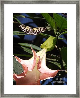 Nature's Beauty Framed Print