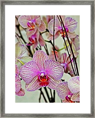 Nature's Beauty Framed Print by Jeanette Arango