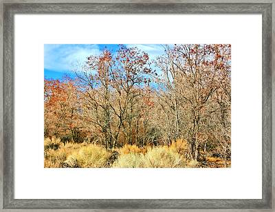 Natures Beauty Framed Print by Marilyn Diaz