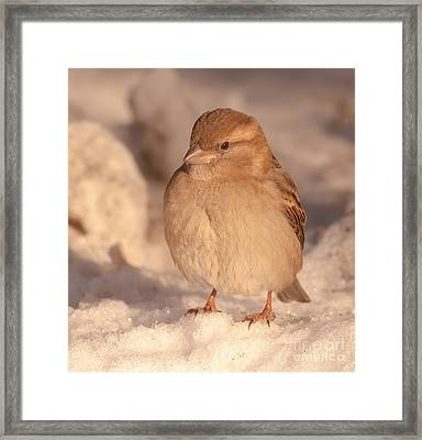 Framed Print featuring the photograph Nature's Beauty by Rose-Maries Pictures
