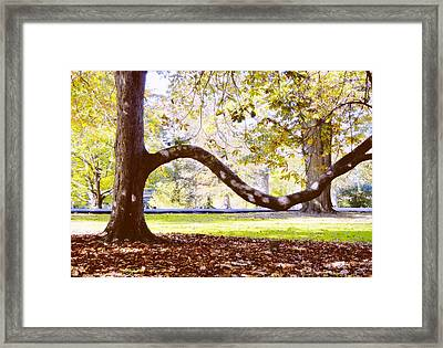 Nature's Bench Framed Print by JAMART Photography