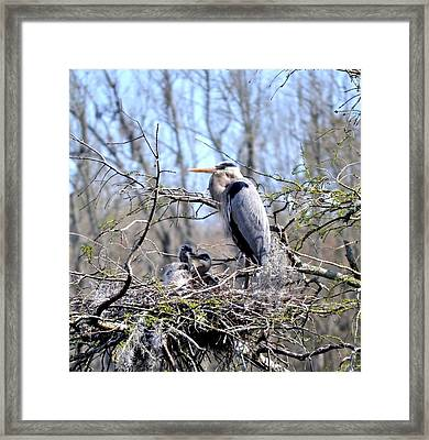 Nature's Bodyguard  Framed Print