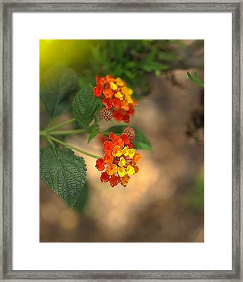 Nature's Bouquet Framed Print